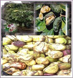 Fibromyalgie Plante Traitement Naturel