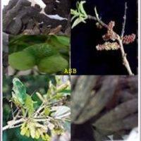 Epilepsie Plantes Traitement Naturel.