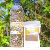 Fièvre Typhoïde Traitement Naturel